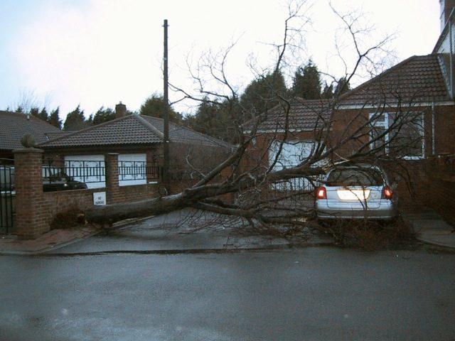 gale damage jan 2005