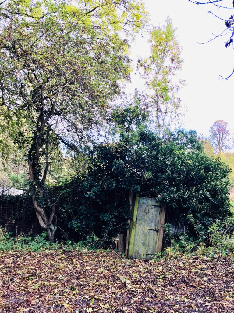 picture of my favourite allotment door which is tilted in a hedge