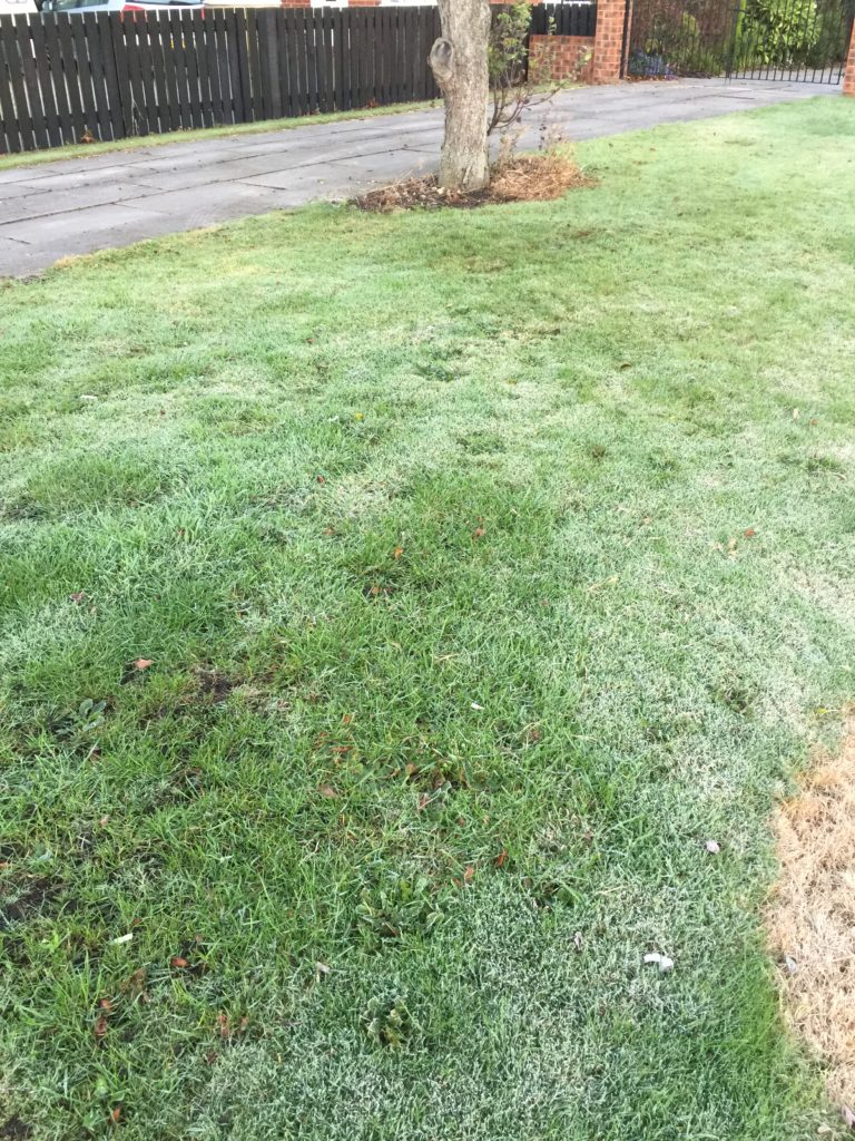picture of frost glistening on the grass