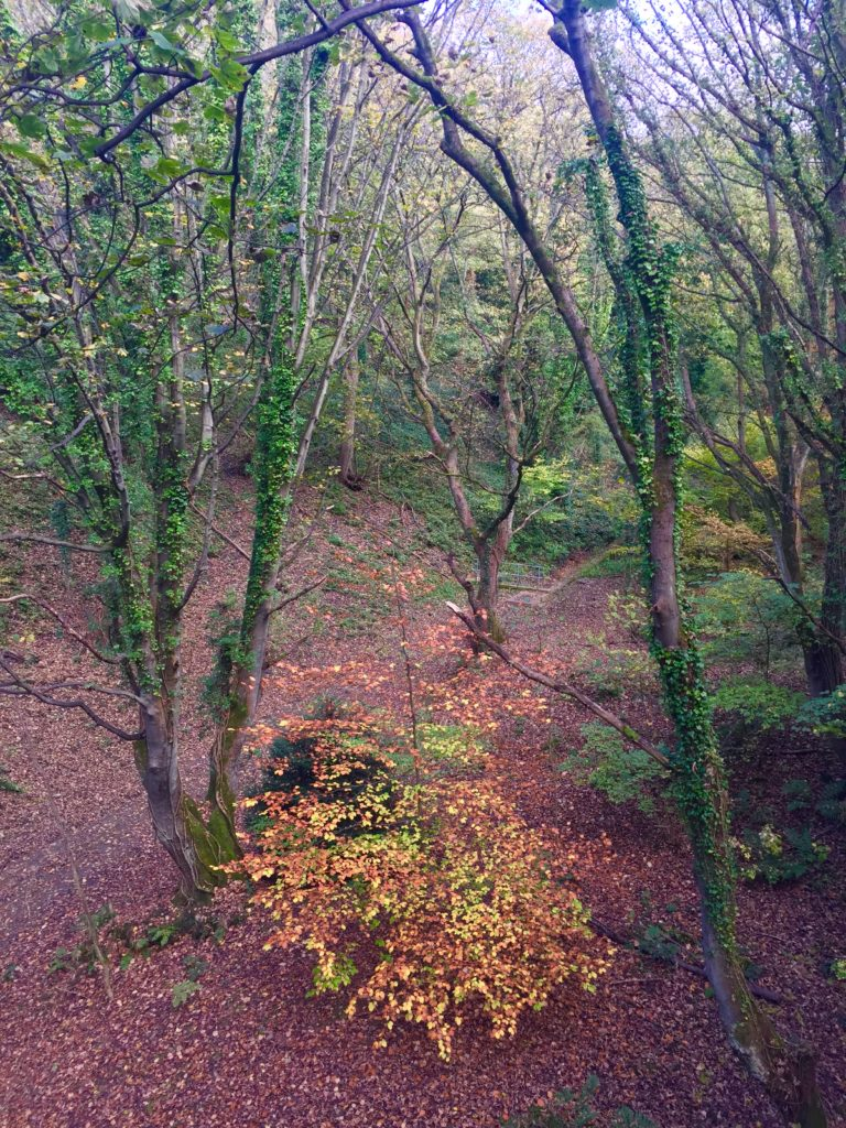 picture from pelaw wood showing a highly coloured tree in the valley