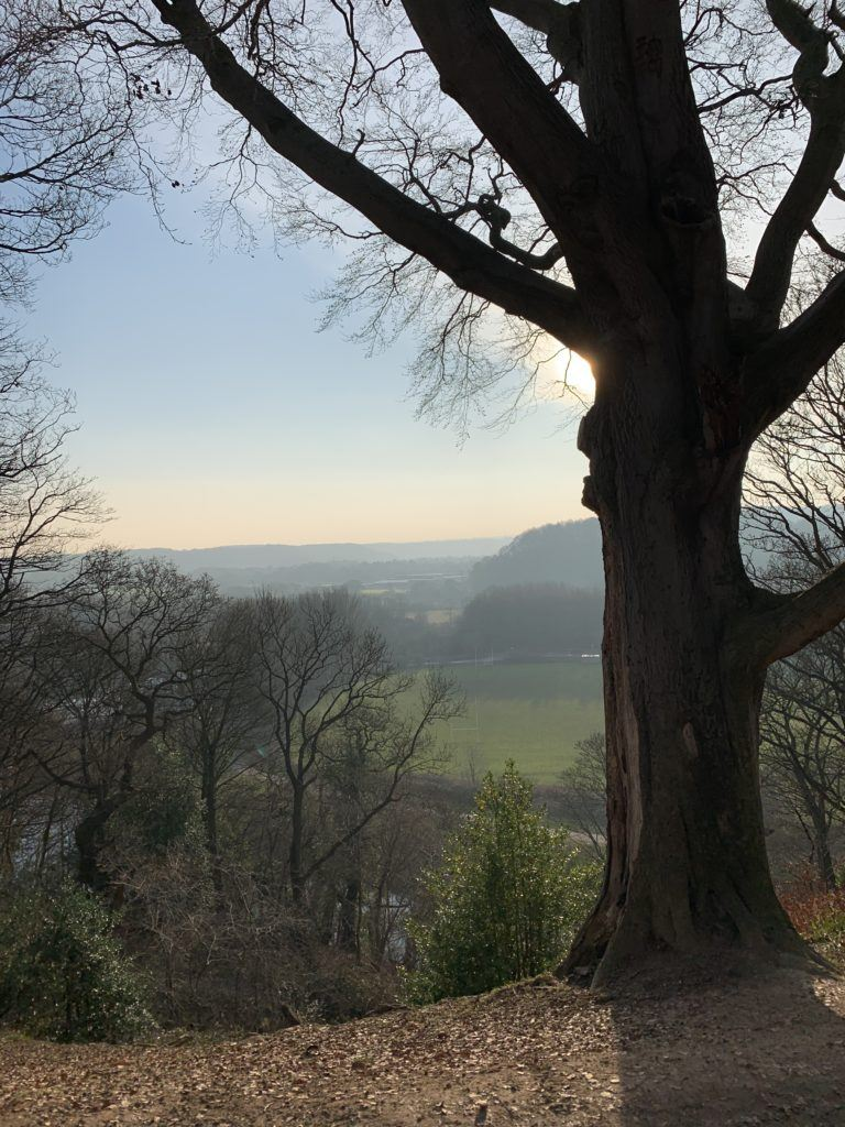 the view from pelaw wood, looking towards Houghall. The silhouette of a large tree dominates the foreground
