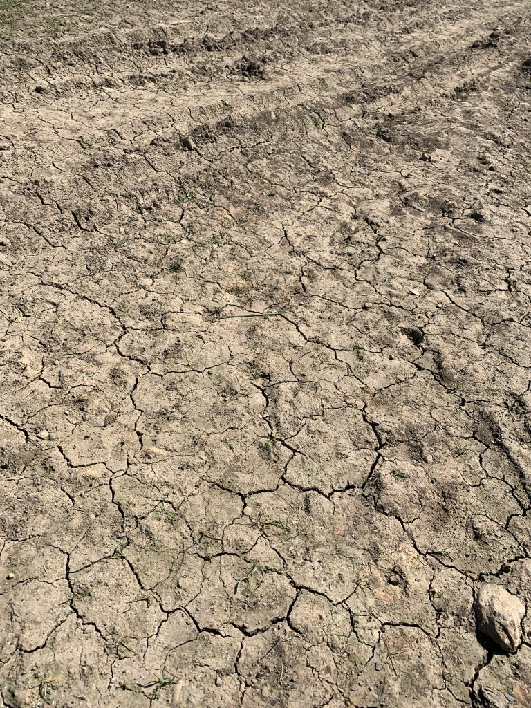 Parched Earth in April 2020