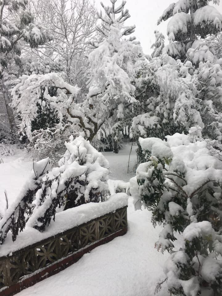 A back garden photo from Kirk Merrington. Taken early on the 8th January 2021