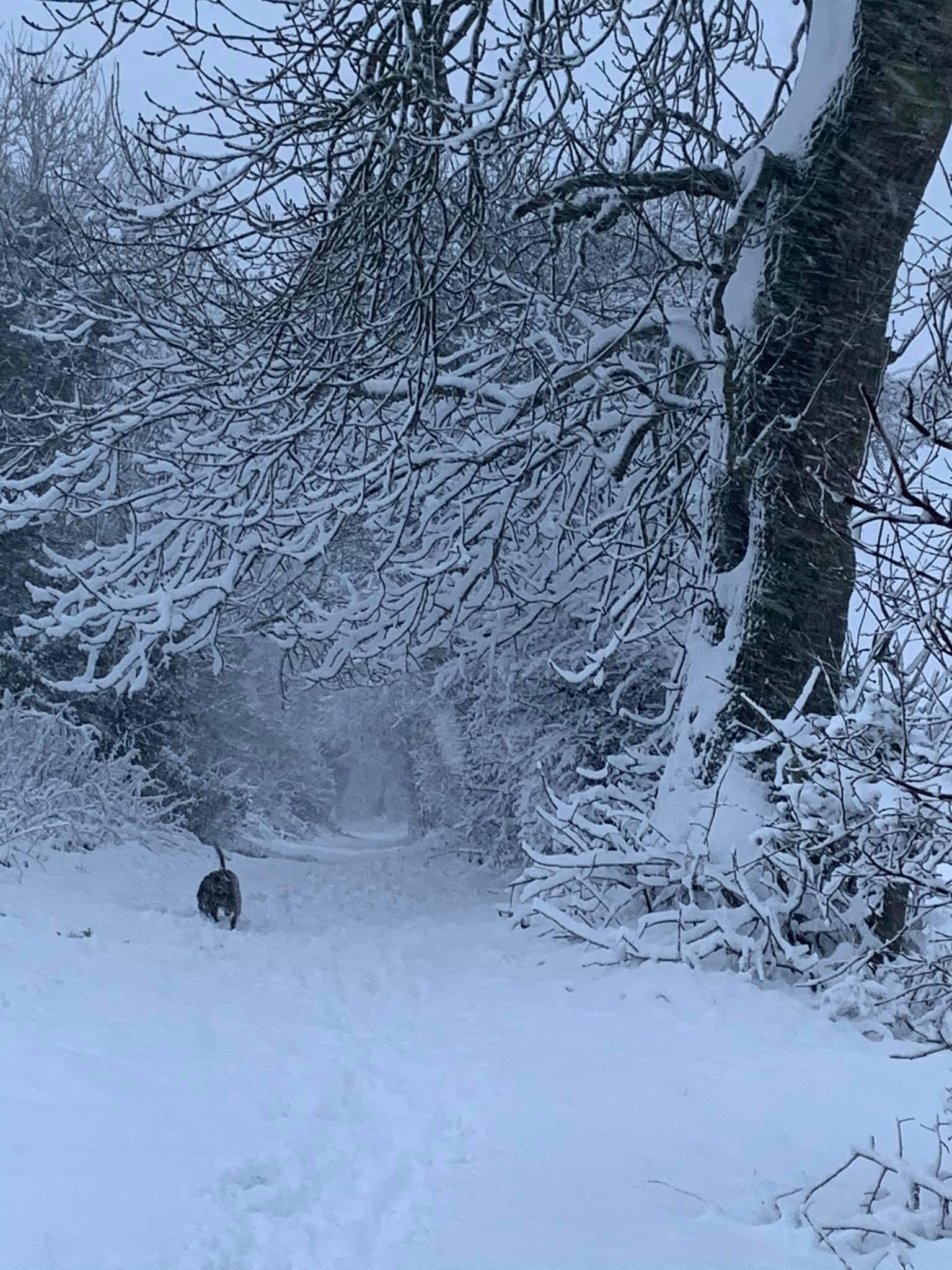 Walking the dog in the deep snow.